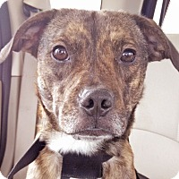 Adopt A Pet :: Rolo - Knoxville, TN