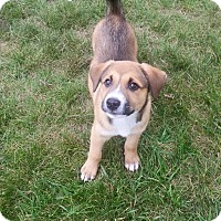 Adopt A Pet :: Puppy Tribe - Phoenxville, PA