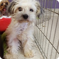 Adopt A Pet :: Meredith - Scottsdale, AZ