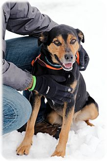 Rottweiler/Retriever (Unknown Type) Mix Dog for adoption in Lake Odessa, Michigan - Quincy