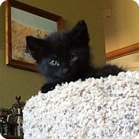 Adopt A Pet :: Andi - Ogallala, NE