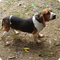 Adopt A Pet :: Sophia - Dumfries, VA