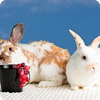 Adopt A Pet :: Sapphire - Marietta, GA