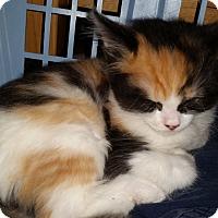 Adopt A Pet :: Panda - Davis, CA