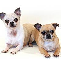 Adopt A Pet :: Bobbi and Sophie - Bloomington, MN