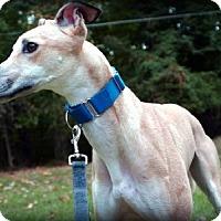 Adopt A Pet :: Watson - Spencerville, MD