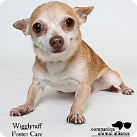 Adopt A Pet :: WIgglytuff (Foster) - Baton Rouge, LA
