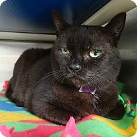 Adopt A Pet :: Lillian - Elyria, OH