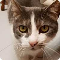 Adopt A Pet :: GIBSON - Tiffin, OH