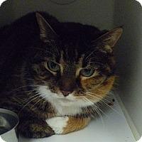 Adopt A Pet :: Miss Pearl - Hamburg, NY