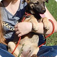 Adopt A Pet :: Foxfire(15 lb) New Pics/Video - SUSSEX, NJ
