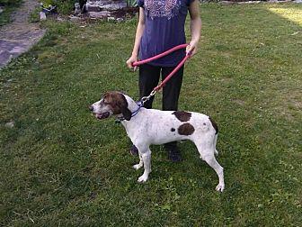 Plott Hound Mix Dog for adoption in Flintstone, Maryland - Bo