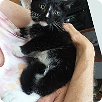 Adopt A Pet :: Remey - Brightwaters,, NY