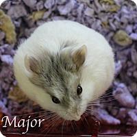 Adopt A Pet :: Major - Bradenton, FL