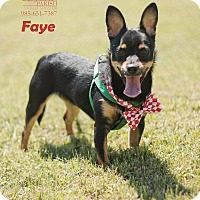 Adopt A Pet :: Faye - Laplace, LA