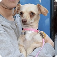 Adopt A Pet :: Lori - New York, NY