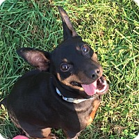 Adopt A Pet :: Chester - Dunkirk, NY