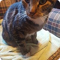Adopt A Pet :: Bob - Albany, NY