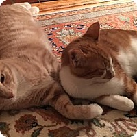 Adopt A Pet :: Mikie (with Tucker) - Fairfax, VA