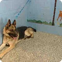Adopt A Pet :: URGNT ON 12/10 San Bernardino - San Bernardino, CA