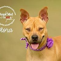 Adopt A Pet :: Flora - Pearland, TX