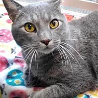 Adopt A Pet :: Baxter - Johnson City, TN