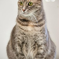 Adopt A Pet :: PATTY - Toledo, OH