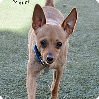 Adopt A Pet :: Rupert - Youngwood, PA