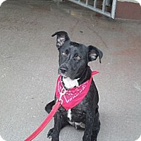 Adopt A Pet :: Nick~Prison Obedience Trained - Hazard, KY