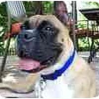 Adopt A Pet :: Leah - Albany, GA