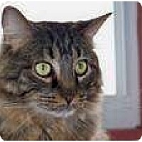 Adopt A Pet :: JoJo - Columbus, OH