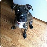 Adopt A Pet :: Bangarang - Pittsbugh, PA