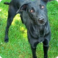 Adopt A Pet :: Beatrice - East Sparta, OH