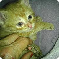 Adopt A Pet :: Finnegan the Leprechaun - Columbus, OH
