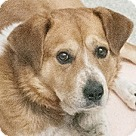 Adopt A Pet :: Cincinnati