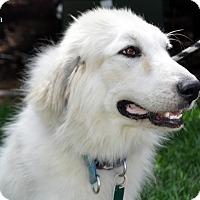 Adopt A Pet :: Livia - Indian Trail, NC