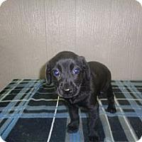 Adopt A Pet :: Lewis-pending adoption - East Hartford, CT