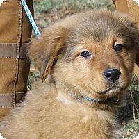 Adopt A Pet :: BRAD - handsome!! - Stamford, CT