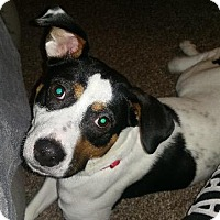 Adopt A Pet :: Indy - Indianapolis, IN