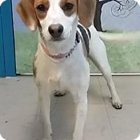 Adopt A Pet :: Pia - Avon, NY