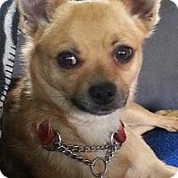 Adopt A Pet :: Charlie - Alexandria, KY