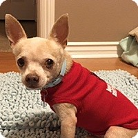 Adopt A Pet :: Perro - Las Vegas, NV