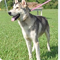 Adopt A Pet :: Pete - Forrest City, AR