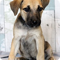 Adopt A Pet :: Bam Bam - Waldorf, MD