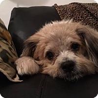 Adopt A Pet :: Candy - Ft. Lauderdale, FL