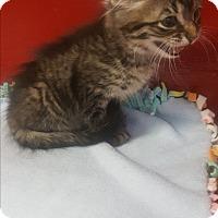 Adopt A Pet :: Butterfinger - yuba city, CA