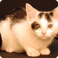 Adopt A Pet :: Frost - Newland, NC