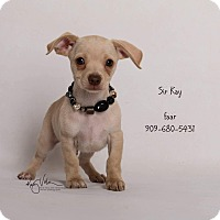 Adopt A Pet :: Sir Kay - Riverside, CA
