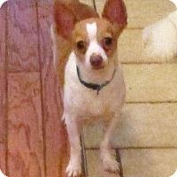 Adopt A Pet :: Tucker - Alexandria, KY