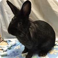 Adopt A Pet :: Midnight - Woburn, MA